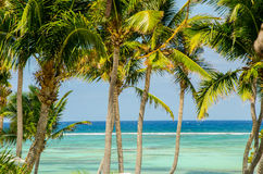 Palms and sea in the background, relaxation and holidays Royalty Free Stock Photography