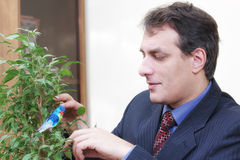 Businessman growing plant Stock Image