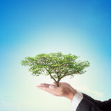 Businessman hand holding big tree with blue sky Royalty Free Stock Photos