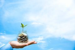 Businessman hand holding coin money cover growing plant. Plant growing out of coins. With filter effect, money growing and small tree in jar, blue sky Stock Photo