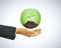 Businessman hand holding green sapling with soil in the globe Stock Photos