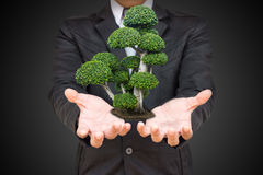 Businessman hand holding green tree in palm. Stock Photos