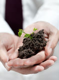 Businessman hands holding green tree. Royalty Free Stock Photo