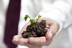 Businessman hands holding green tree. Royalty Free Stock Image