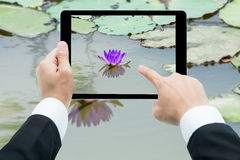 Businessman hands tablet taking pictures Pink lotus flower on th Royalty Free Stock Photo