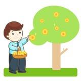 Businessman harvest money tree  Royalty Free Stock Photos