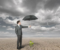 Businessman helps agriculture. Businessman protect with umbrella a plant to help the agriculture Royalty Free Stock Photo