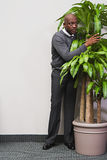 Businessman hiding behind office plant Royalty Free Stock Photos
