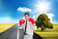 Businessman with his boxing gloves ready to fight Royalty Free Stock Photos