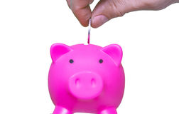 Businessman holding coin and pink piggy bank on white background Stock Images