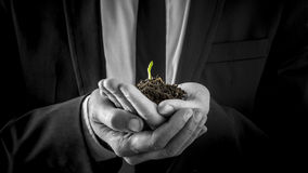 Businessman holding a germinating plant Royalty Free Stock Photos