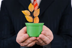 Businessman is holding green pot with a plant Royalty Free Stock Image