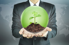 Businessman holding green sapling with soil inside the sphere. Conservation concept Stock Photo
