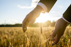 Businessman holding his hands around an ear of wheat stock photos