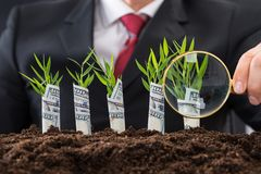 Businessman holding magnifying glass in front of money plants stock images