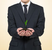 Businessman holding plant Stock Photos