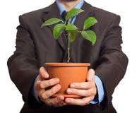 Businessman is holding a plant in pot stock images
