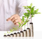 Businessman holding plant sprouting of coins Royalty Free Stock Images