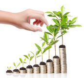 Businessman holding plant sprouting from  handful of coins Royalty Free Stock Image