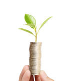 Businessman holding plant sprouting from  handful of coins Stock Images