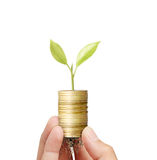Businessman holding plant sprouting from  handful of coins Royalty Free Stock Photo