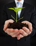 Businessman holding sapling representing growth Royalty Free Stock Photography