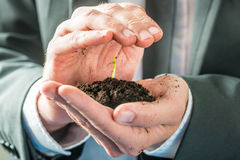 Businessman holding a sprouting seedling Stock Image