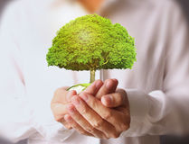 Businessman holding tree Stock Photography