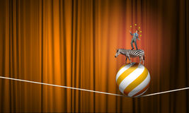 Businessman juggling with balls. Young businessman standing on zebra and juggling with balls Royalty Free Stock Images