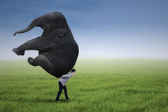 Businessman lifting heavy elephant Stock Photos