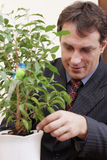 Businessman looking after indoor plant Stock Images