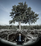 Businessman meditating under tree Stock Image