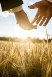 Businessman nurturing an ear of ripening wheat Royalty Free Stock Images