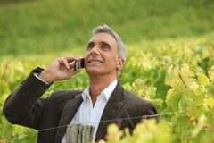 Businessman on phone in vineyards Stock Photography