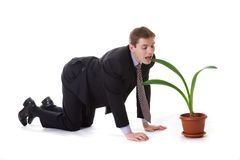Businessman and plant Royalty Free Stock Image
