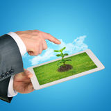 Businessman pointing at tablet with plant Royalty Free Stock Image
