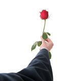 Businessman present the rose Stock Photography