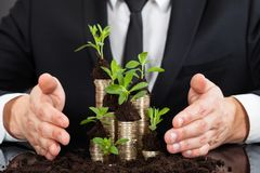 Businessman protecting coins in saplings Stock Image