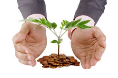 Businessman protecting plant Stock Images
