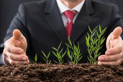 Businessman protecting plants Stock Image