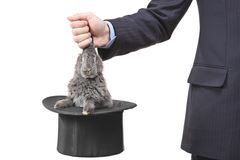 Businessman pulling a rabbit out Stock Photography