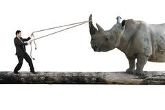 Businessman pulling rope against rhinoceros balancing on tree tr royalty free stock image