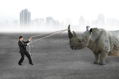 Businessman pulling rope against rhinoceros on concrete floor Royalty Free Stock Images