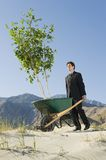 Businessman Pushing Wheelbarrow And Tree in the Desert Royalty Free Stock Images