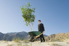 Businessman Pushing Wheelbarrow And Tree in the Desert Stock Image