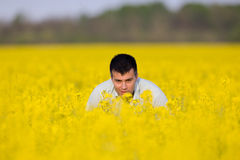 Businessman in rapeseed field Stock Photos