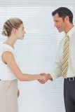 Businessman shaking hands with his attractive colleague Stock Image