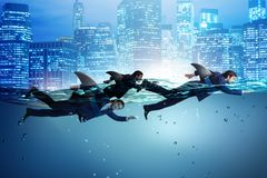 The businessman with shark fin swimming in water. Businessman with shark fin swimming in water stock image