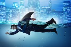 The businessman with shark fin swimming in water. Businessman with shark fin swimming in water stock photos