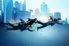 The businessman with shark fin swimming in water. Businessman with shark fin swimming in water royalty free stock image